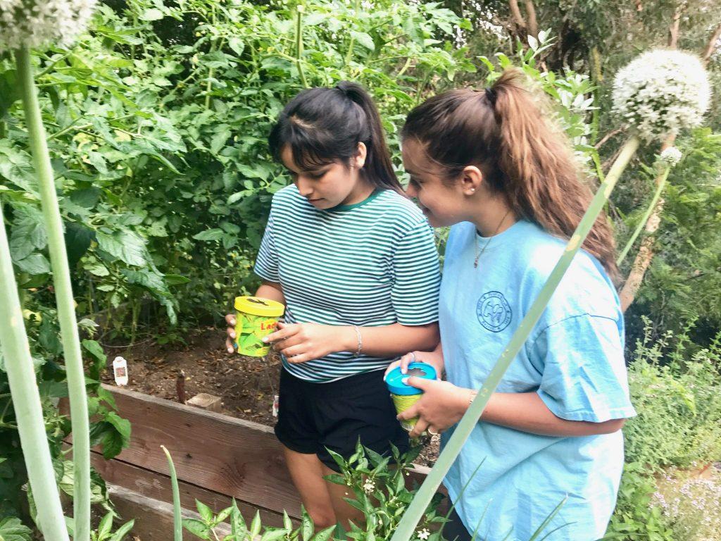 girls in backyard vegetable garden releasing ladybugs